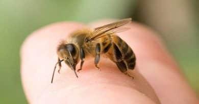 Alergia a las Picaduras de Abejas