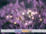 ¿Es Realmente Buena La Lavanda para la Ansiedad?